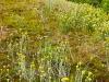 Растительность Балтийской косы